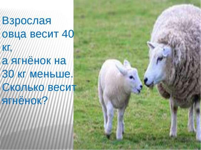 Взрослая овца весит 40 кг, а ягнёнок на 30 кг меньше. Сколько весит ягнёнок?