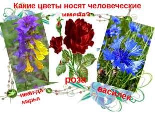 Какие цветы носят человеческие имена? иван-да-марья василек роза