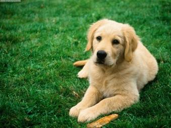 http://www.webpark.ru/uploads34/dogs_46.jpg