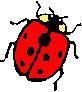 http://www.msif.org/images/ladybird.jpg