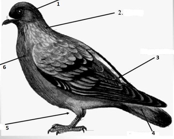 0003-003-1.-Opishite-formu-tela-ptitsy-i-ukazhite-iz-kakikh-otdelov-ono-sostoit.jpg