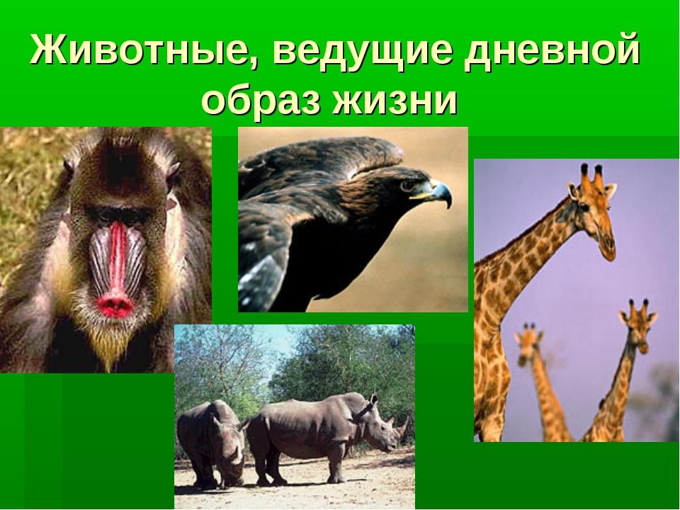 Животные, ведущие дневной образ жизни
