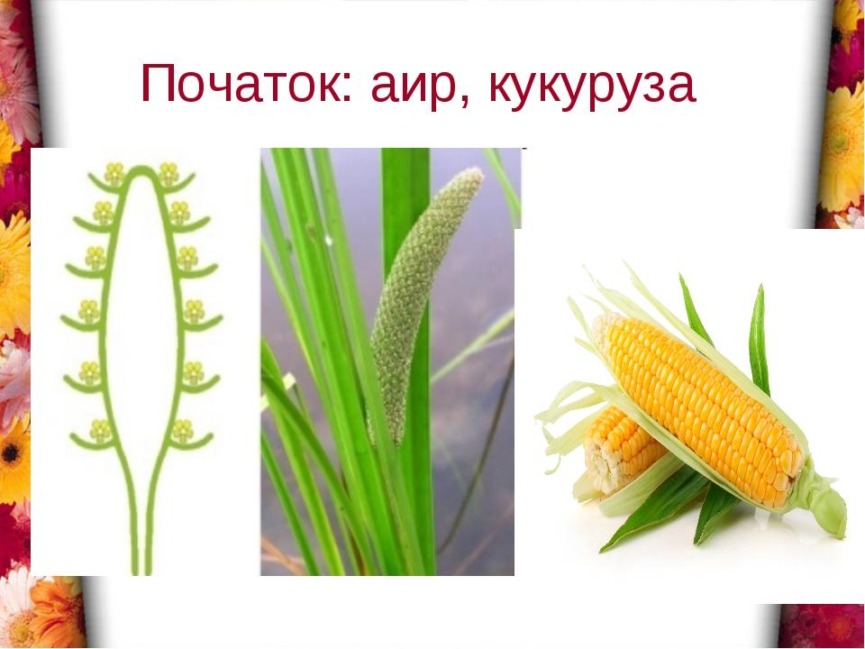 Початок: аир, кукуруза