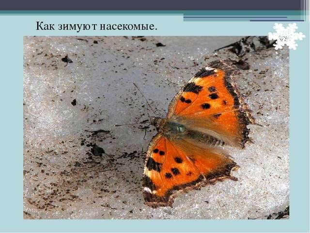 Как зимуют насекомые.