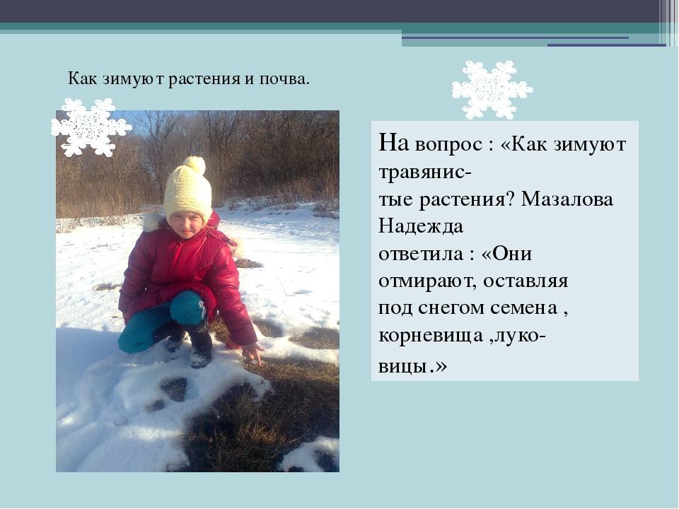 На вопрос : «Как зимуют травянис- тые растения? Мазалова Надежда ответила : «...