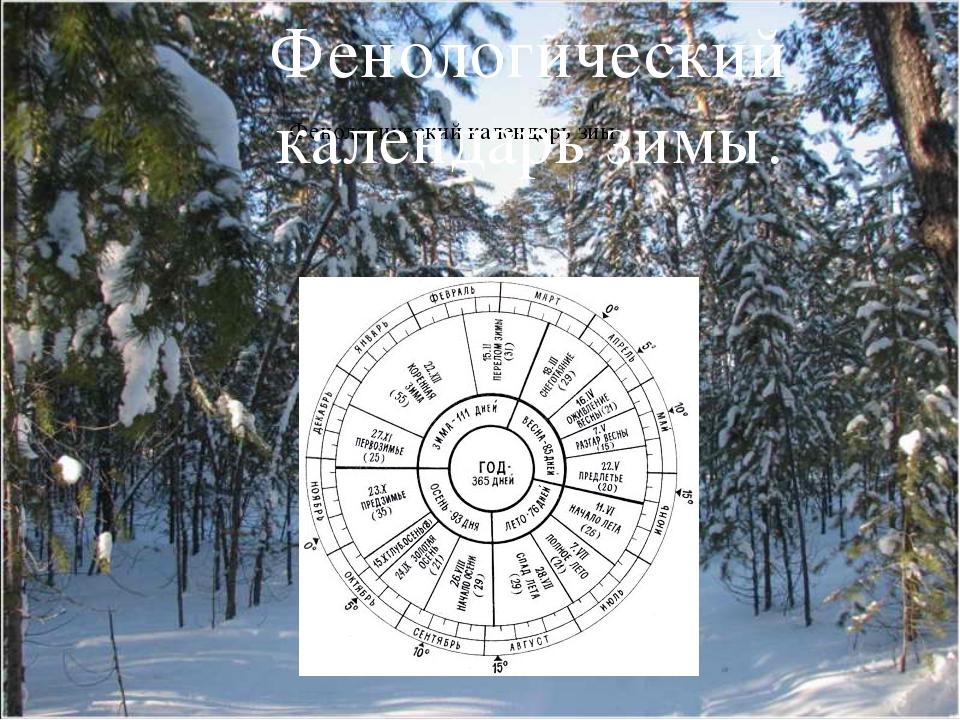 Фенологический календарь зиы Фенологический календарь зимы.