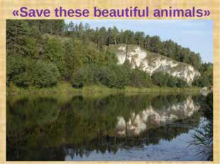 «Save these beautiful animals»