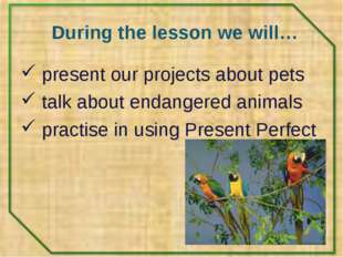 During the lesson we will… present our projects about pets talk about endange