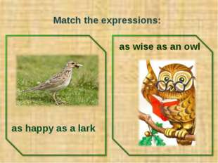 Match the expressions: as happy as a lark as wise as an owl