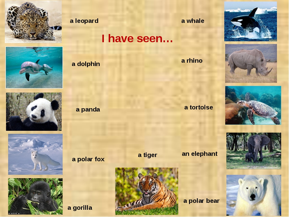 a dolphin a leopard a panda a polar fox a gorilla an elephant a tortoise a r...