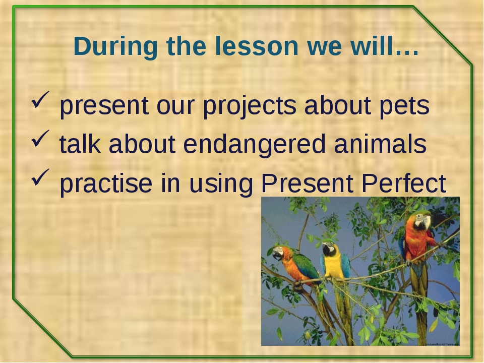 During the lesson we will… present our projects about pets talk about endange...