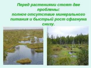 Перед растениями стоят две проблемы: полное отсутствие минерального питания и