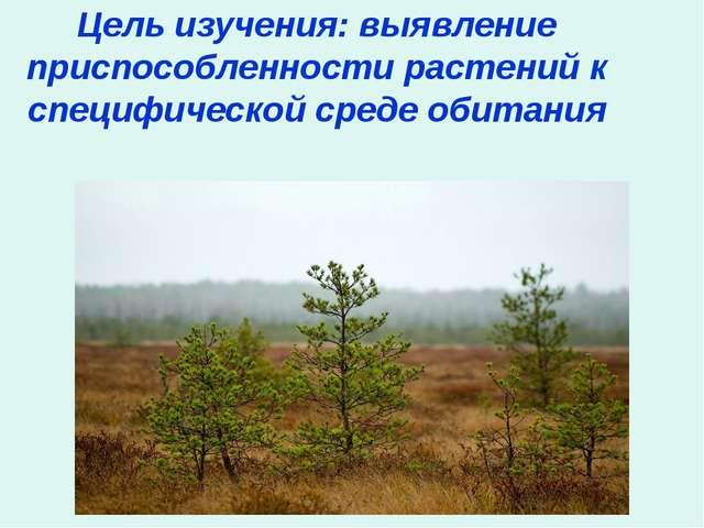 Цель изучения: выявление приспособленности растений к специфической среде оби...