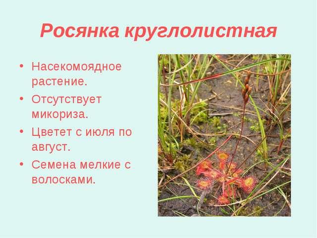 Росянка круглолистная Насекомоядное растение. Отсутствует микориза. Цветет с...
