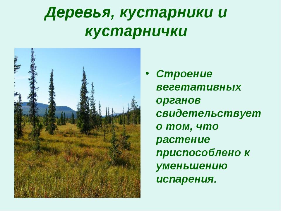 Деревья, кустарники и кустарнички Строение вегетативных органов свидетельству...