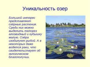 Уникальность озер Большой интерес представляют озёрные растения. Среди них мо