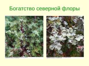 Богатство северной флоры