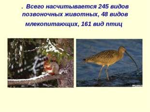 . Всего насчитывается 245 видов позвоночных животных, 48 видов млекопитающих,