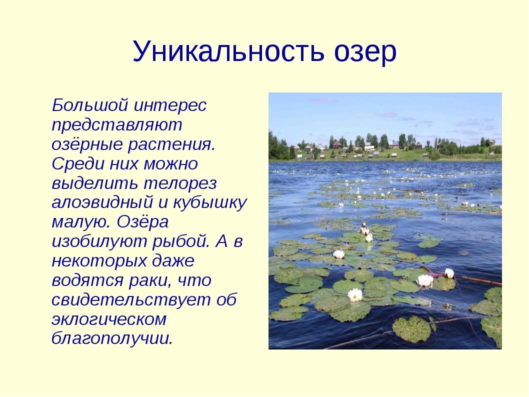 Уникальность озер Большой интерес представляют озёрные растения. Среди них мо...