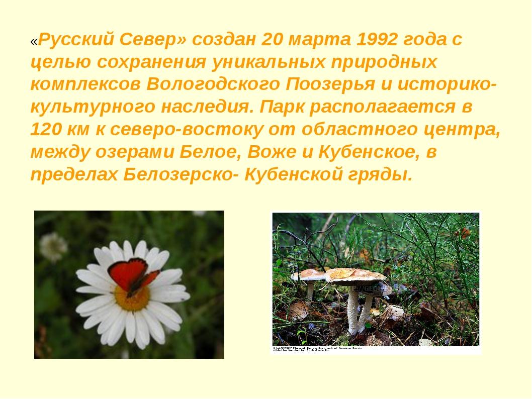 «Русский Север» создан 20 марта 1992 года с целью сохранения уникальных приро...