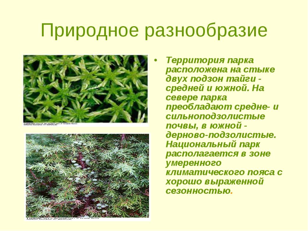 Природное разнообразие Территория парка расположена на стыке двух подзон тайг...