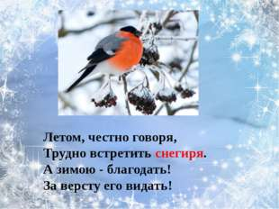 В серой шубке перовой И в морозы он герой, Скачет, на лету резвится, Не орёл,
