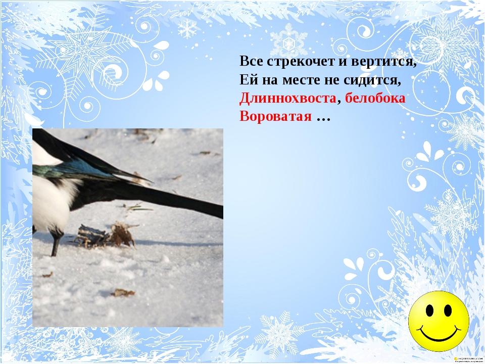 Прыг да скок, ну что за птица, Все на месте не сидится. С виду нет его храбре...