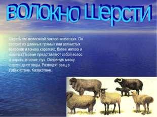 Шерсть-это волосяной покров животных. Он состоит из длинных прямых или волнис