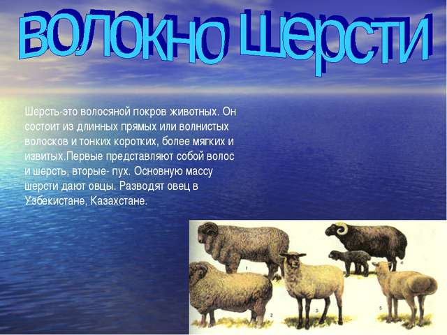 Шерсть-это волосяной покров животных. Он состоит из длинных прямых или волнис...