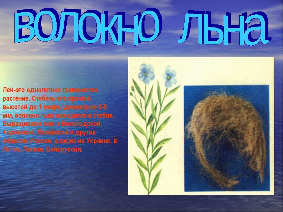 Лен-это однолетнее травянистое растение. Стебель его прямой, высотой до 1 мет...