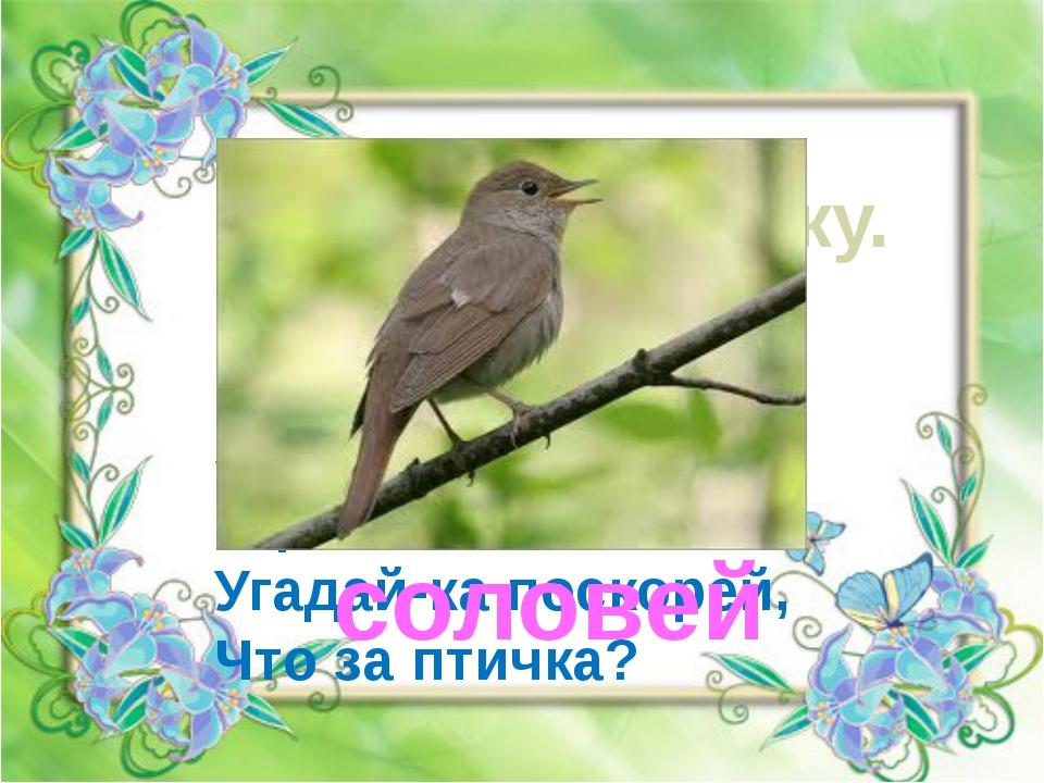 Отгадай загадку. Он весной поёт красиво, Звонко, весело, игриво! Угадай-ка по...