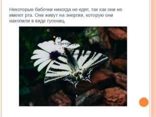Некоторые бабочки никогда не едят, так как они не имеют рта. Они живут на эне