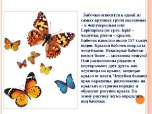 Бабочки относятся к одной из самых крупных групп насекомых – к чешуекрылым и