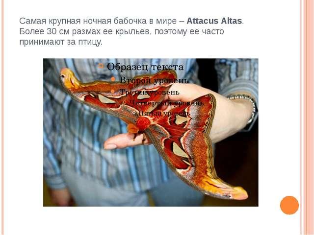 Самая крупная ночная бабочка в мире – Attacus Altas. Более 30 см размах ее кр...