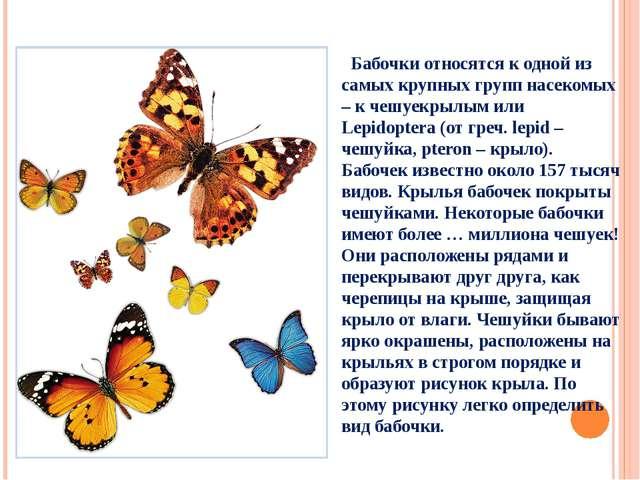 Бабочки относятся к одной из самых крупных групп насекомых – к чешуекрылым и...
