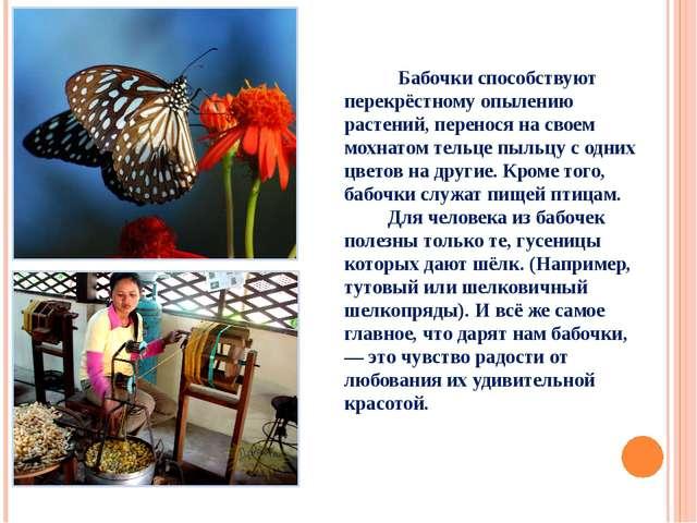 Бабочки способствуют перекрёстному опылению растений, перенося на своем мохн...