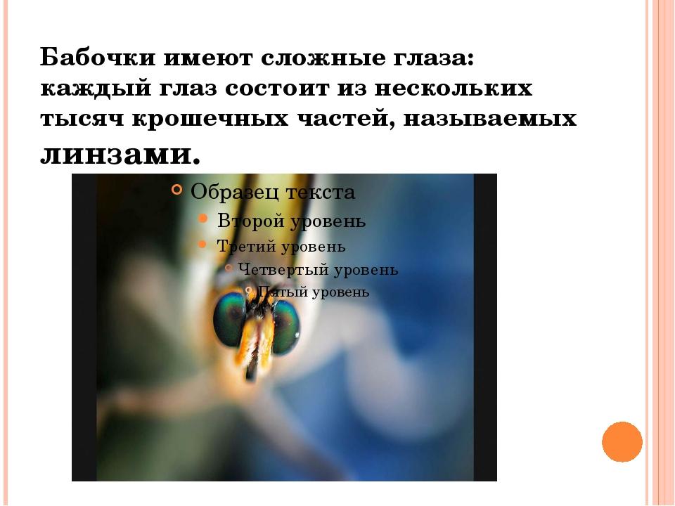 Бабочки имеют сложные глаза: каждый глаз состоит из нескольких тысяч крошечны...