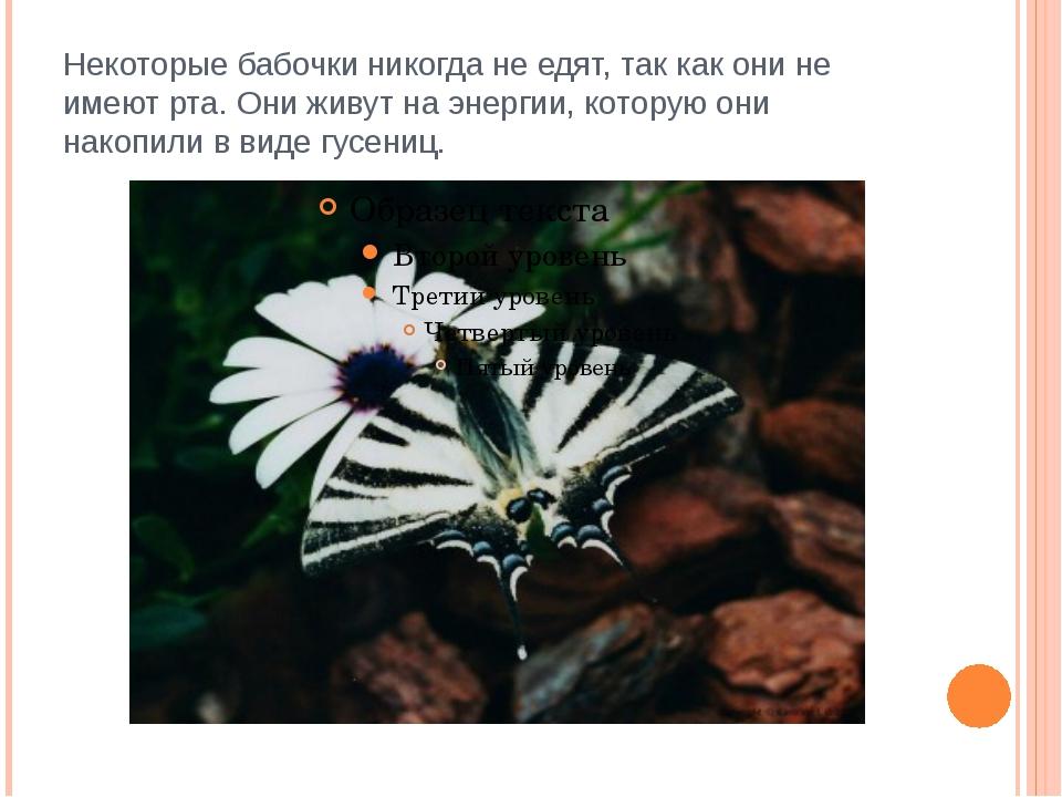 Некоторые бабочки никогда не едят, так как они не имеют рта. Они живут на эне...