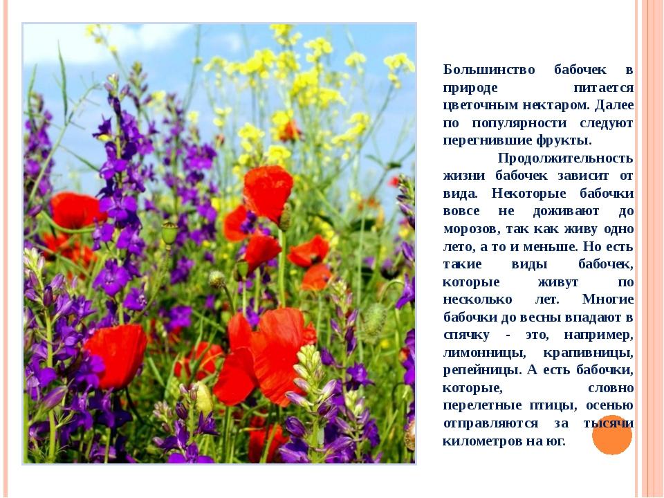 Большинство бабочек в природе питается цветочным нектаром. Далее по популярно...