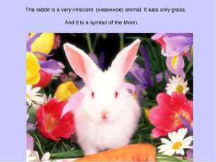 The rabbit is a very innocent (невинное) animal. It eats only grass. And it