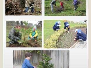 Способы ухода и защиты деревьев и растений .