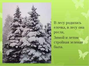 В лесу родилась елочка, в лесу она росла, Зимой и летом стройная зеленая была.