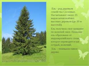 Ель - род деревьев семейства Сосновые. Насчитывают около 35 видов вечнозелён