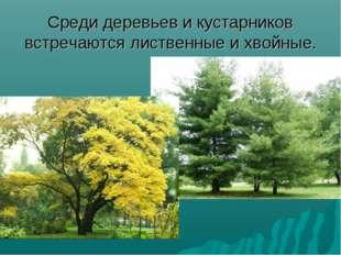 Среди деревьев и кустарников встречаются лиственные и хвойные.