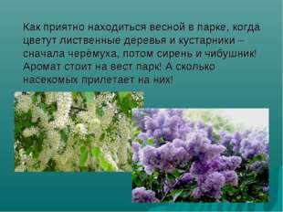 Как приятно находиться весной в парке, когда цветут лиственные деревья и кус