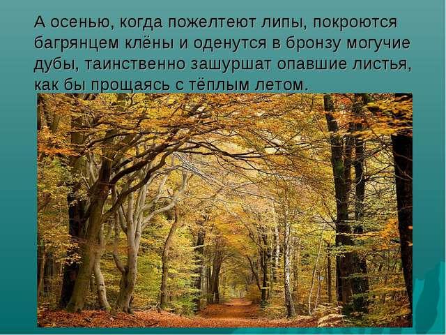А осенью, когда пожелтеют липы, покроются багрянцем клёны и оденутся в бронз...