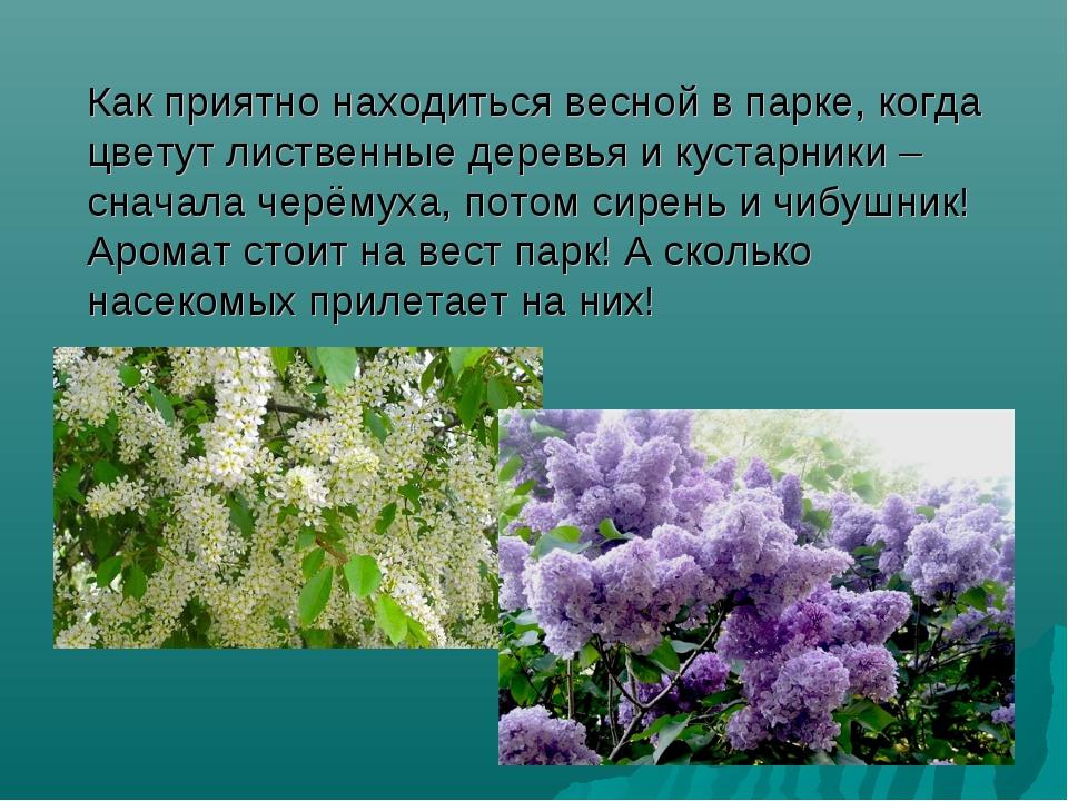 Как приятно находиться весной в парке, когда цветут лиственные деревья и кус...