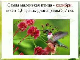 Самая маленькая птица -колибри, весит 1,6 г, а их длина равна 5,7 см.