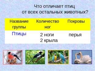 Что отличает птиц от всех остальных животных? 2 ноги 2 крыла перья