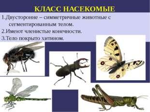 КЛАСС НАСЕКОМЫЕ бабочки стрекозы 1.Двусторонне – симметричные животные с сегм